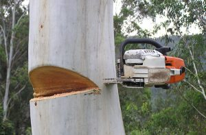 Removing a stuck Chainsaw blade