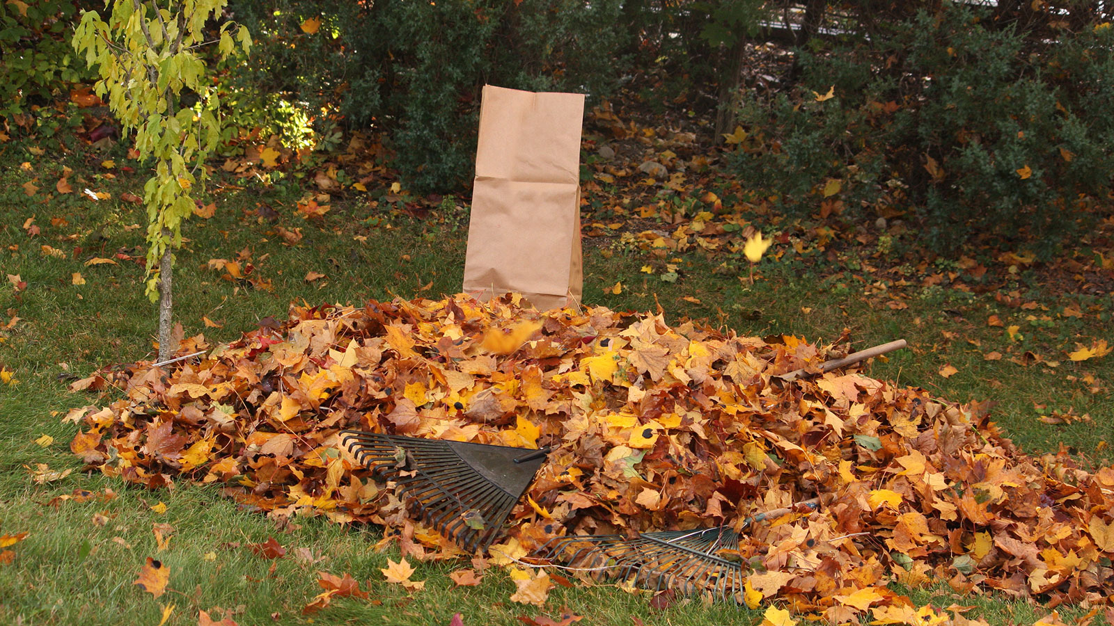 Lawn and Leaf Bags Lowes